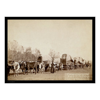 Oxen Freighting In the Black Hills SD 1887 Poster
