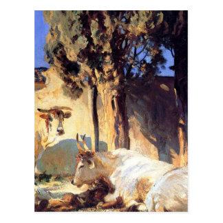 Oxen Resting by John Singer Sargent Postcard