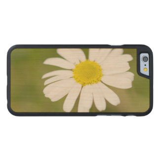 Oxeye Daisy Carved Maple iPhone 6 Case