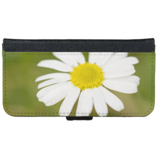 Oxeye Daisy iPhone 6 Wallet Case