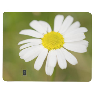 Oxeye Daisy Journal