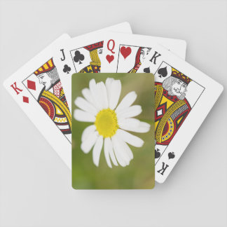 Oxeye Daisy Playing Cards