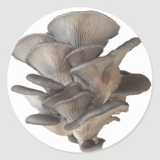 Oyster Mushroom Classic Round Sticker