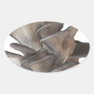 Oyster Mushroom Oval Sticker