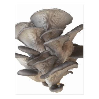 Oyster Mushroom Postcard