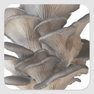Oyster Mushroom Square Sticker