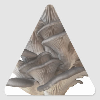 Oyster Mushroom Triangle Sticker