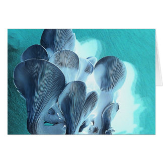 Oyster Mushrooms in Blue Card