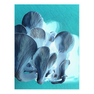Oyster Mushrooms in Blue Postcard