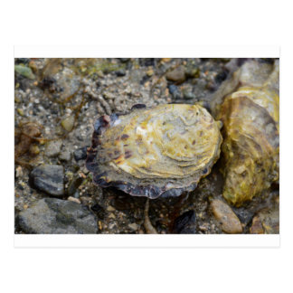 Oyster shell postcard