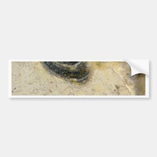 Oysters Bumper Sticker