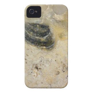 Oysters iPhone 4 Cases