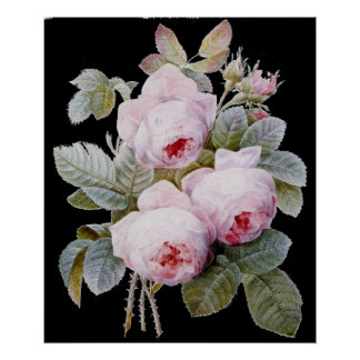 P.J. Redoute Bourbon Rose Bouquet on Black Poster