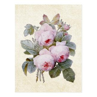 P.J. Rose de Redoute Bourbon floral Cartes Postales