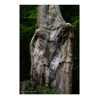 © P Wherrell Lion bark tree trunk unusual photo Poster