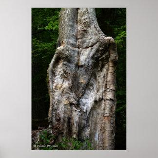 © P Wherrell Lion bark tree trunk unusual photo Poster