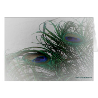 © P Wherrell Pale stylish peacock feathers Card