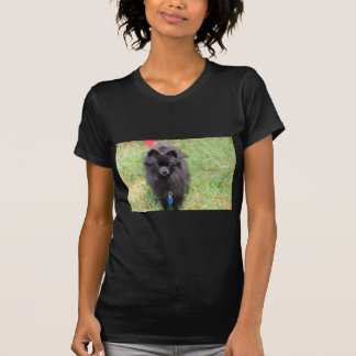 Pablo the Pomeranian T-Shirt