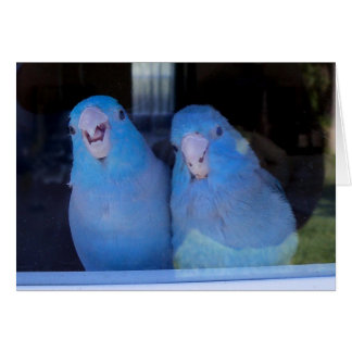 Pacific Blue Parrotlets Hi Howdy Greeting Card Art