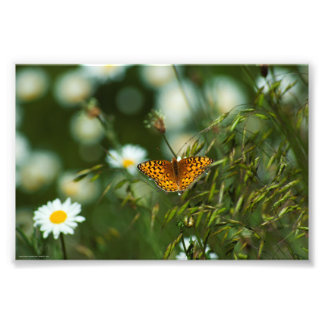 Pacific Fritillary Butterfly Photo Print