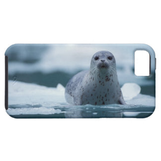pacific harbor seal, Phoca vitulina richardsi iPhone 5 Cover