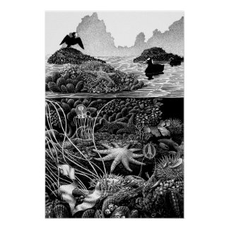 Pacific Intertidal Poster