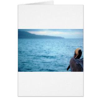 pacific pelican card