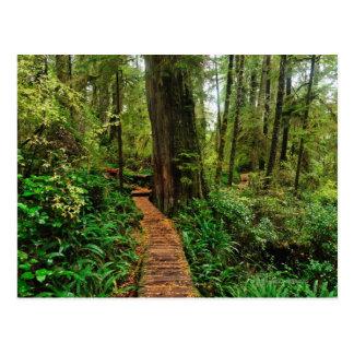 Pacific Rim National Park, on a rainy autumn day Postcard