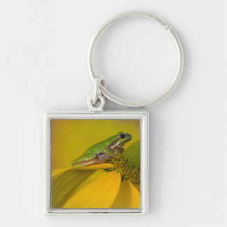 Pacific tree frog on flowers in our garden, 2 Silver-Colored square keychain
