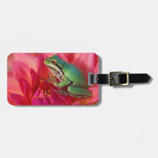 Pacific tree frog on flowers in our garden, 4 bag tag