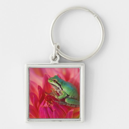 Pacific tree frog on flowers in our garden, 4 key chains