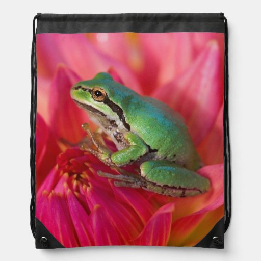 Pacific tree frog on flowers in our garden, 4 cinch bag
