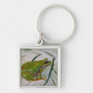 Pacific tree frog on flowers in our garden, Silver-Colored square keychain