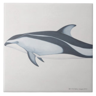 Pacific White-Sided Dolphin Tile