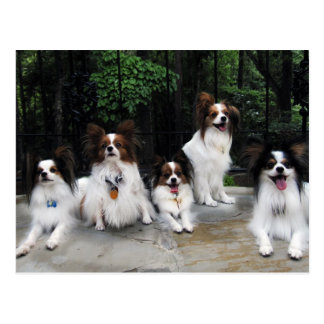 Pack of Papillons from Hershey Kiss Hero Kennels Postcard