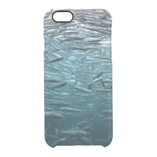 Packed Like Sardines Clear iPhone 6/6S Case