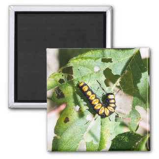 Paddle Caterpillar Magnet