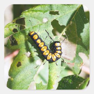 Paddle Caterpillar Square Sticker