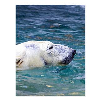 Paddling Polar Bear Postcard