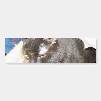 pagan the cat Bumper Sticker