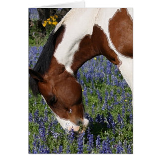 Paint Horse in Field of Wildflowers Card