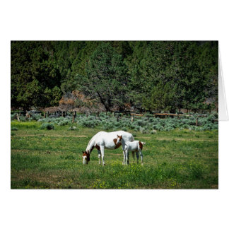 Paint Horse Mare and Foal Card