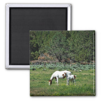 Paint Horse Mare and Foal Magnet