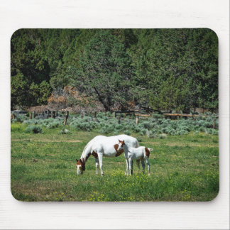 Paint Horse Mare and Foal Mouse Pad