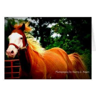 Paint Horse Running Card