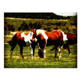 Paint Horses Postcard