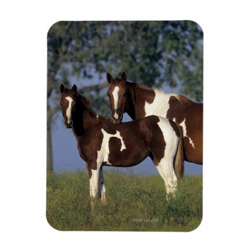 Paint Mare & Foal Rectangle Magnets
