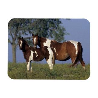 Paint Mare & Foal Rectangular Photo Magnet