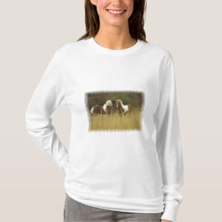 Paint Ponies in Field Long Sleeve Shirt