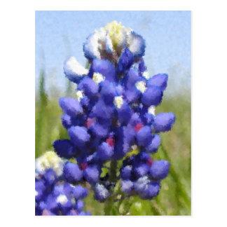 """""""Painted"""" Bluebonnet Postcard"""